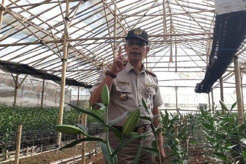 Virus Berbahaya yang Dibawa oleh Bibit Bunga Lili asal Belanda ke Indonesia