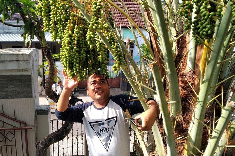 Buah kurma tumbuh lebat di halaman rumah salah satu warga kota Mataram, NTB