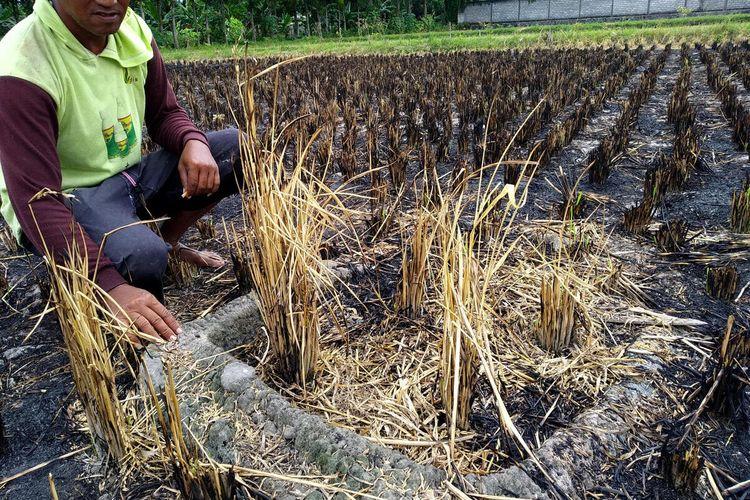 Seorang warga menunjukkan batu jambangan kuno yang terkubur di tengah petak sawah di Kelurahan Karangtengah, Kecamatan Sananwetan, Kota Blitar, Rabu (28/4/2021)