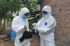 Flu Burung: Gejala, Cara Penularan, dan Cara Mencegah