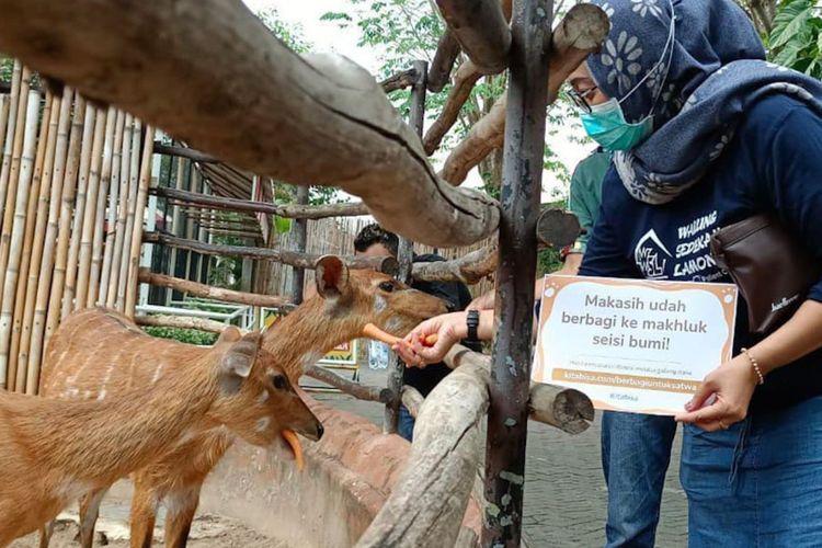 Ketua komunitas Warung Sedekah Lamongan (WSL) Khansa Alvian Novi, saat memberi makan satwa yang ada di Maharani Zoo dan Goa Lamongan (Mazoola).