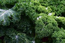 Cara Menanam Kale di Pot, Bisa Langsung Dipetik untuk Bikin Salad