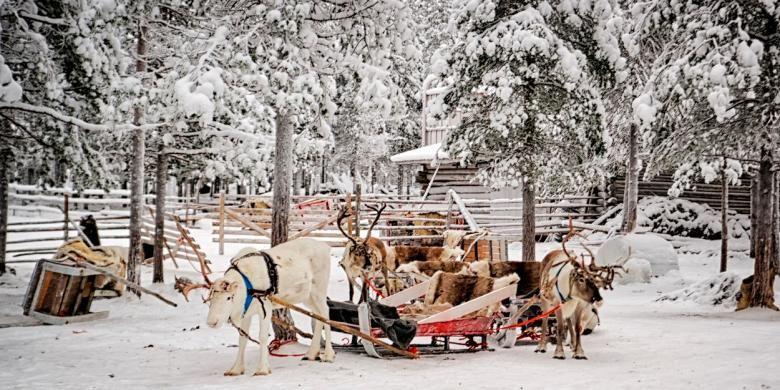 Kereta seluncur salju yang ditarik rusa kutub di Desa Rovaniemi, Finlandia