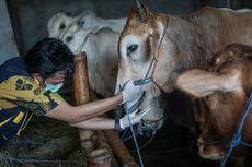 Sejumlah Imbauan PBNU Terkait Penyembelihan Hewan Kurban