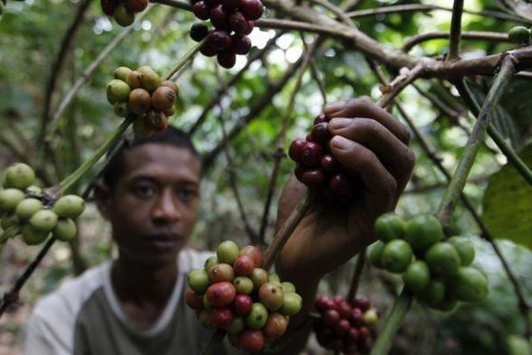 Ilustrasi petani kopi