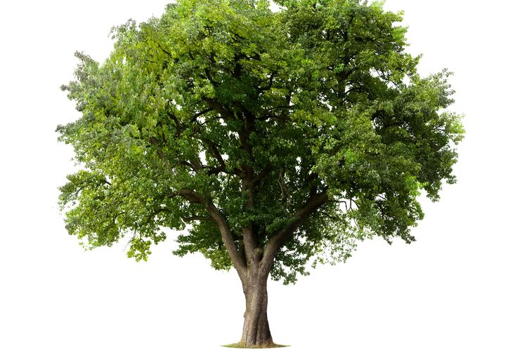 Fotosintesis yang terjadi pada tumbuhan hijau