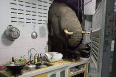 Temboknya Jebol, Rumah Ini Jadi Tempat Makan Drive-through Gajah Hutan
