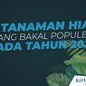 INFOGRAFIK: Daftar 8 Tanaman Hias yang Bakal Populer pada 2021