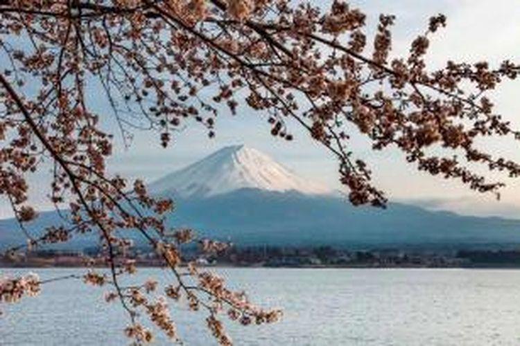 Pemandangan Gunung Fuji, Jepang, dengan latar depan bunga sakura di musim semi. Komite Warisan Dunia UNESCO, 16 Juni 2013 memutuskan kawasan Gunung Fuji masuk dalam Warisan Dunia alam dan budaya global.