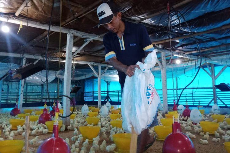 Peternak ayam di Sumedang, Jawa Barat mengeluhkan anjloknya harga jual ayam potong di tingkat peternak, Senin (25/2/2019). AAM AMINULLAH/KOMPAS.com