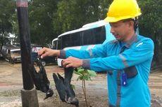 Listrik di Karimun Sering Padam, Salah Satu Penyebabnya Ular Masuk ke Trafo