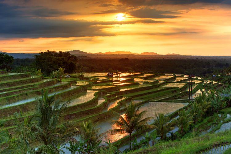 Sawah Jatiluwih di Bali yang masuk dalam Waisan Budaya Dunia UNESCO.