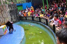 Kalah dari Kebun Binatang Singapura, Basuki Ancam Copot Kepala UPT Ragunan