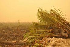 Ini Lokasi Penanaman Bibit Sawit di Lahan Bekas Kebakaran Hutan
