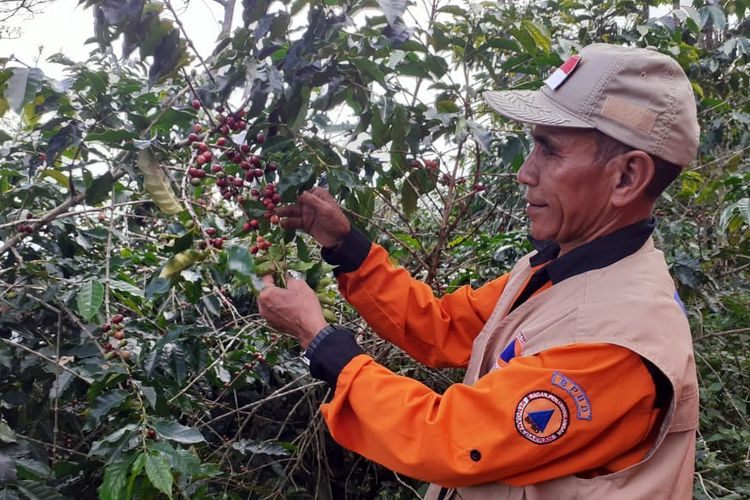 Kebun Kopi Colol di Kampung Colol, Manggarai Timur, Nusa Tenggara Timur.