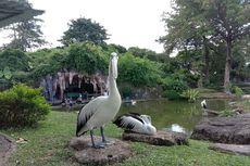 Bertemu Pelikan dan Elang Brontok di Taman Burung TMII
