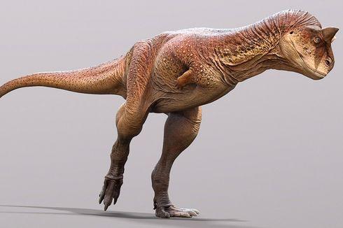 Aneh, Ditemukan Fosil Dinosaurus Karnivora Mirip Banteng