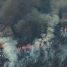 Rekor Kebakaran Hutan Baru di Brasil, Amazon dan Pantanal Hangus