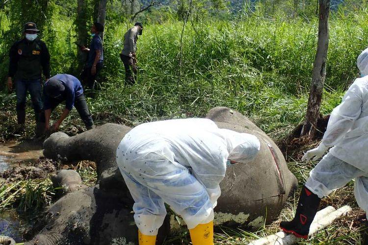 Foto dok, BKSDA, Tim dokter hewan dari BKSDA dan Unsyiah melakukan neokropsi terhadap anak gajah betina yang mati di CRU Naca, Trumon Tengah, Kabupaten Aceh Selatan. Sabtu (03/07/2021)