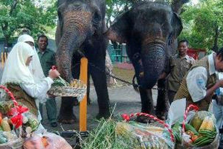 Sejumlah siswa SMP Al Hikmah Surabaya dan petugas memberi makan dua ekor gajah di Kebun Binatang Surabaya, Kamis (26/8/2010). Pemberian makan ini merupakan hadiah bagi para hewan di kebun binatang dan sebagai bentuk keprihatinan atas matinya sejumlah hewan.