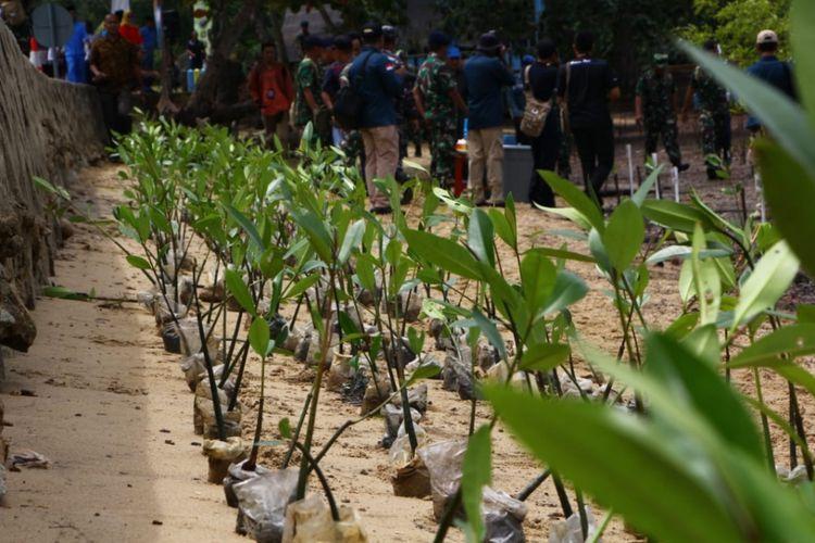 Ilustrasi pohon bakau