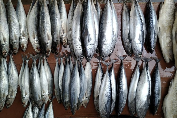 Ilustrasi ikan cakalang.