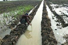 Berkat Optimasi Lahan Rawa, Lahan Pertanian di Tulang Bawang Minim Banjir