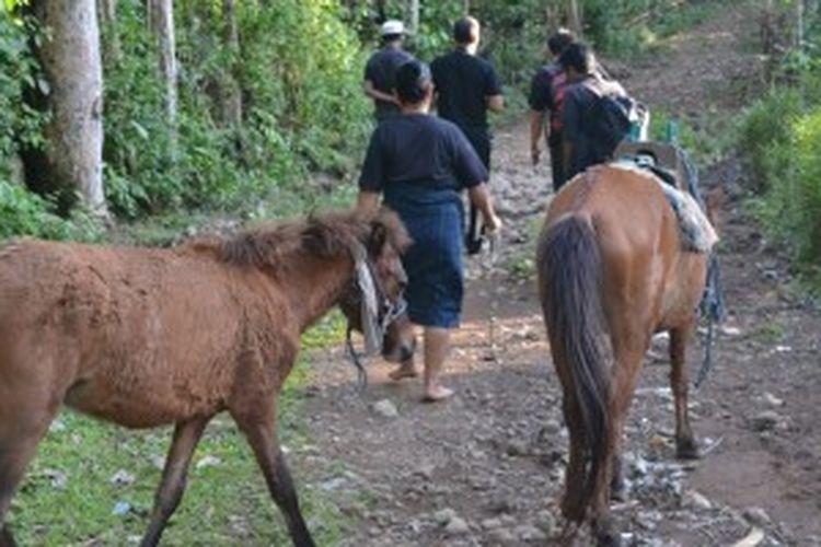 Kuda menjadi hewan yang banyak dipelihara masyarakat di Desa Adat Ammatoa, Desa Tana Towa Kecamatan Kajang, Kabupaten Bulukumba, Sulawesi Selatan.