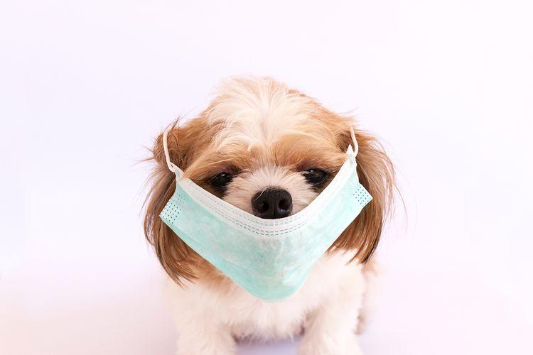 Ilustrasi anjing pakai masker.