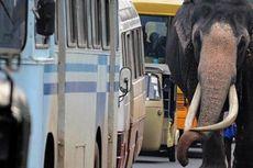 Khawatirkan Keselamatan Warga, Sri Lanka Batalkan Balap Gajah