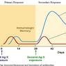 Ramai soal Antibodi Disebut Turun Setelah Disuntik Vaksin, Ini Penjelasan Ahli