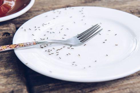 Tips Menjadikan Rumah Bebas Semut