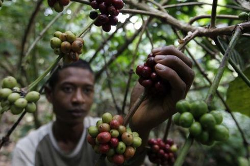 Ekspor Pertanian Naik, Petani Makin Sejahtera