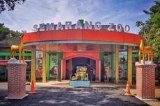 Semarang Zoo Kembali Buka, Ada Penghuni Baru