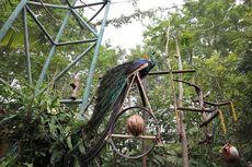 Gembira Loka Zoo Terima Wisatawan Usia di Bawah 12 Tahun
