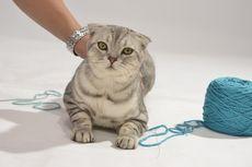 Jangan Biarkan Kucing Bermain Tali atau Benang, Kenapa?