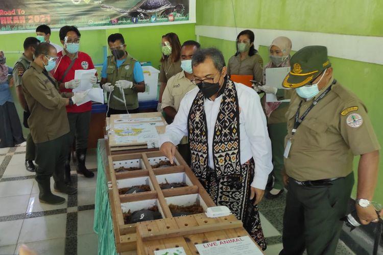 Kepala Balai Besar Konservasi Sumber Daya Alam (BBKSDA) NTT Arif Mahmud, saat melihat kondisi kura-kura leher ular yang berada di tempat penangkaran di Kota Kupang