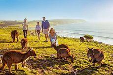 Nikmati Liburan di Tahun 2019 Bersama Pesona Adelaide