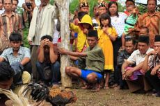 Kontes Sabung Ayam di Bogor Dibubarkan karena Langgar PPKM, Panitia Didenda Rp 5 Juta