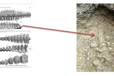 Gali Lubang Septic Tank, Warga Temukan Fosil Paus Berusia 700.000 Tahun