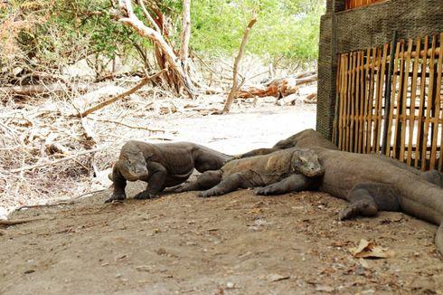 Taman Nasional Komodo akan Ditata seperti Kepulauan Galapagos di Ekuador