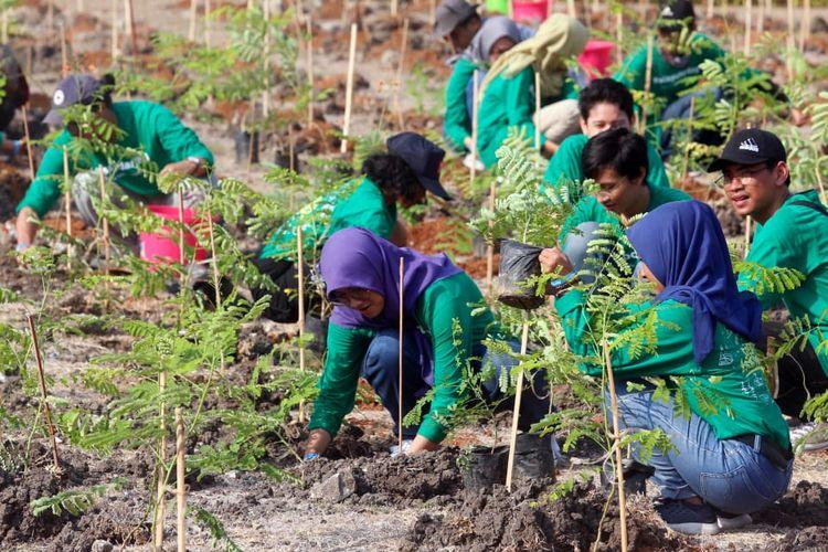Di Candi Boko para mahasiswa tersebut menanam beragam jenis flora, antara lain 1,350 tanaman perdu dan semak berbunga meliputi Bugenvil, Tanjung, Merak, Soka, serta Kepel.