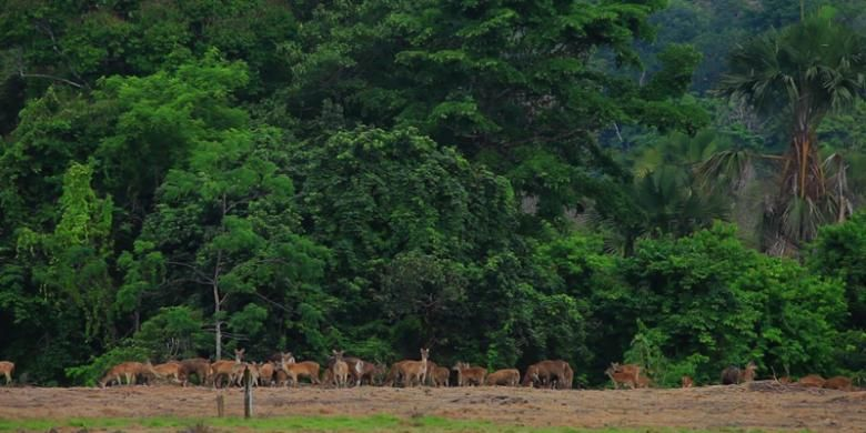 Taman Nasional Alas Puwo.