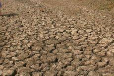 BNPB Ingatkan Empat Daerah Berpotensi Alami Kekeringan Meteorologis