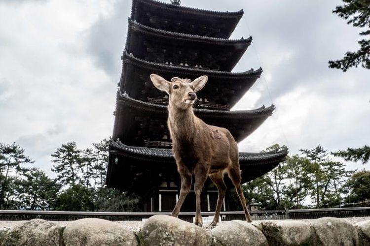 Taman Nara, Jepang.