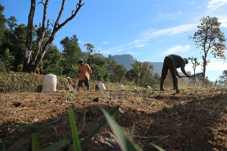 Petani sayur di kaki Gunung Ciremai dari Base Camp Palutungan di Desa Cisantana, Kecamatan Cigugur, Kabupaten Kuningan, Jawa Barat. Gunung Ciremai merupakan gunung tertinggi di Jawa Barat yang memiliki ketinggian 3.078 meter di atas permukaan laut (mdpl).