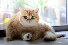 5 Alasan Kucing Peliharaan Suka Menggigit Kaki Pemiliknya