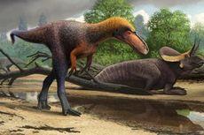 Ini Sepupu T-Rex, Bobotnya Cuma 40 Kilogram dan Tingginya 1 Meter