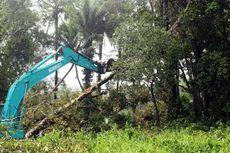 Jadi Lahan Bisnis, Mangrove Berusia Lebih dari 100 Tahun Dibabat