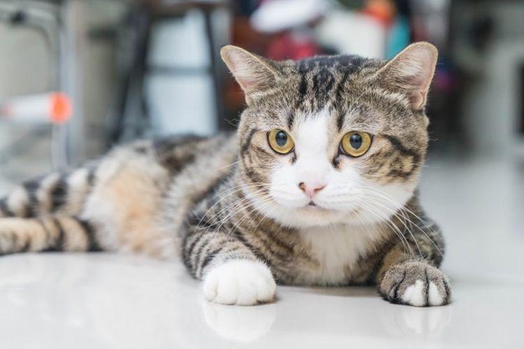 Pengelihatan kucing ternyata tidak hanya hitam dan putih, namun kucing tak dapat membedakan warna seperti manusia.